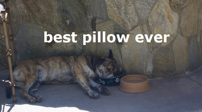 Pitter Patter: BEST PILLOW EVER