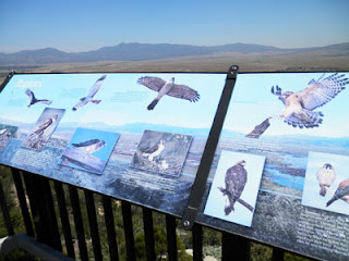 Raptor Identification at Overlook, Photo by Kaliani Devinne, copyright 2013