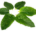 Peppermint green tea diet