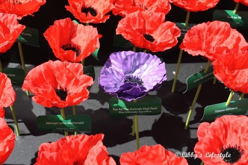Resultado de imagen de remembrance animals war poppys