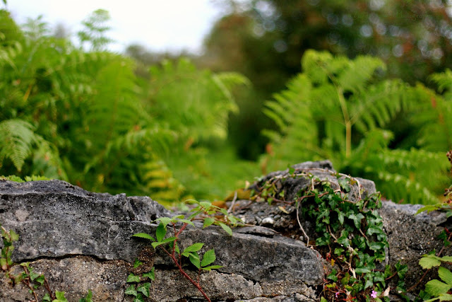 stone wall and green plants