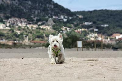 perro en la playa