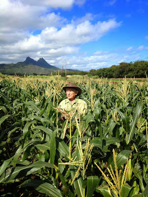 tropical plant science GMO research