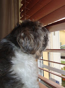 This is Toby (RIP)...looking out the window