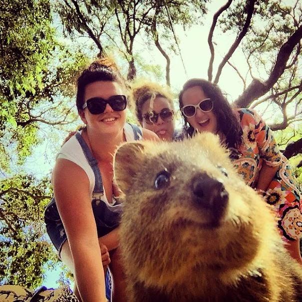 quokka selfie trend australia-7