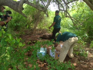 Olifanten op Sri Lanka. Er wordt een zieke olifant in het Nationale park aangetroffen.