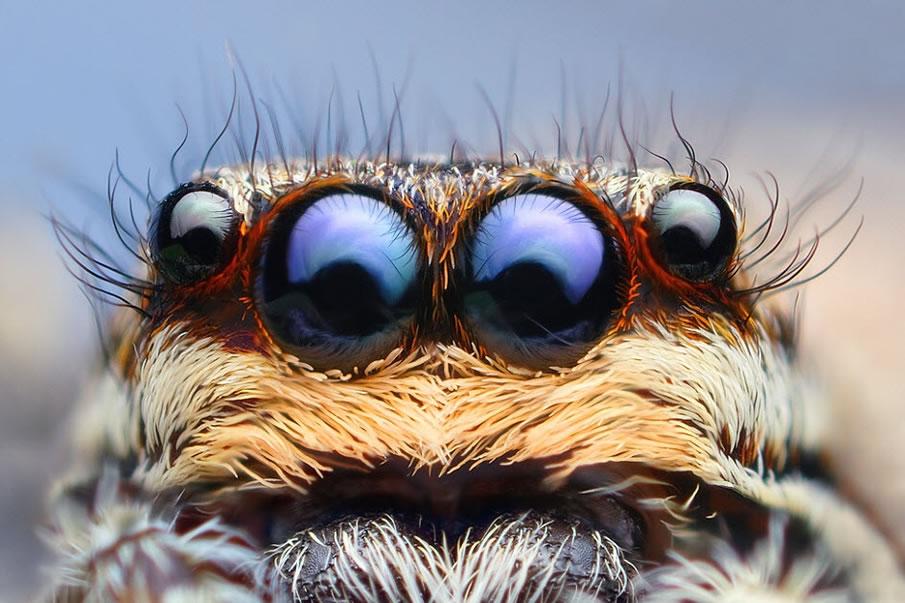 en g%C3%BCzel masa%C3%BCst%C3%BC resimler+%288%29 2012 Yılının En Güzel Masaüstü Resimleri   Jenerik Fotoğraflar