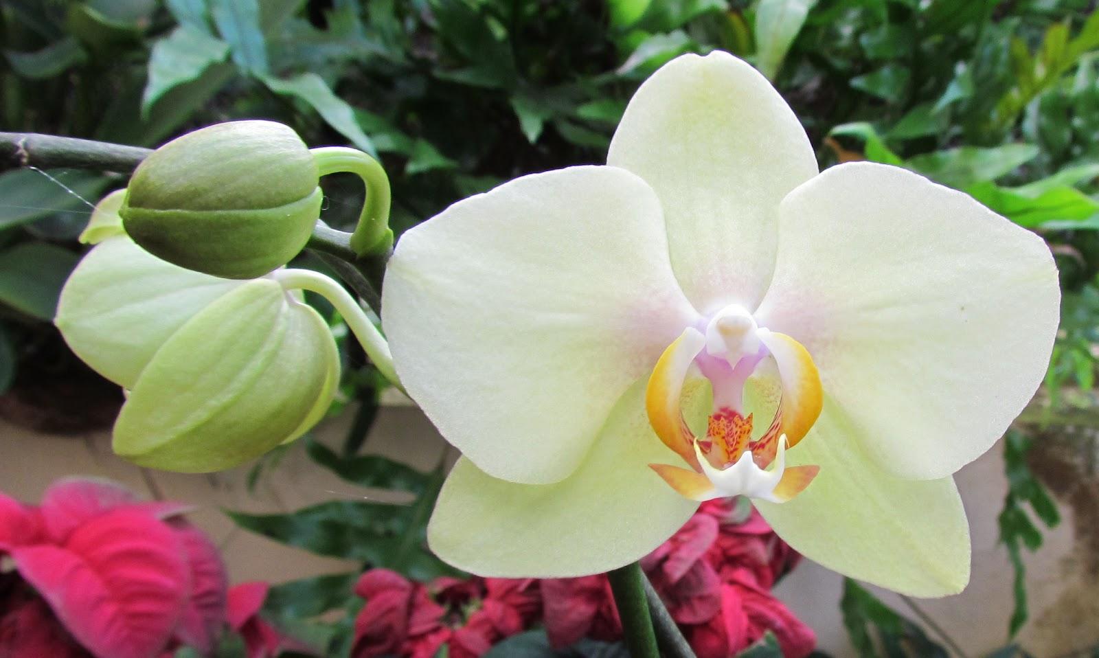 Fotos De Flores Tipicas De Puerto Rico - Dibujos para colorear Flores 110 imágenes Educima
