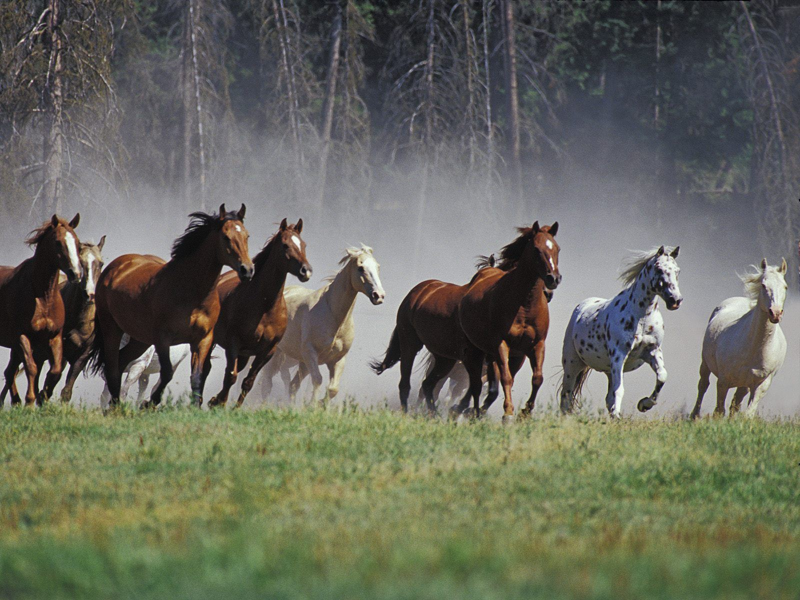 Horses Free Stock Photos Reviewed by mas pono on Rating: 4.5