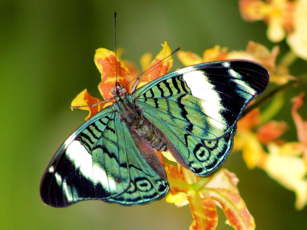 http://3.bp.blogspot.com/-rFw1bfE80ew/TcrhF0bpOgI/AAAAAAAACaw/rBP0iOqYw6k/s1600/rainforest-butterfly-wallpaper.jpg
