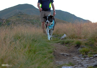 Border collie on a mountan track with a man
