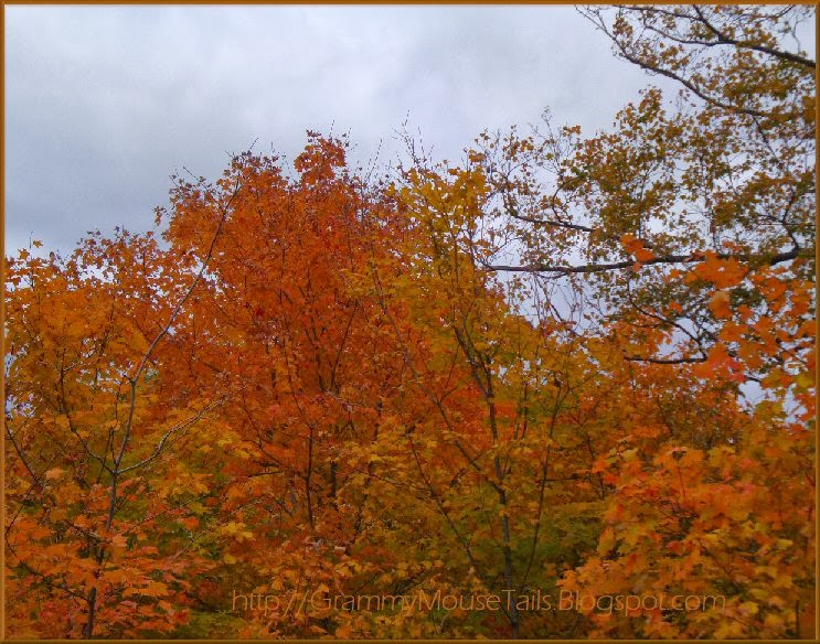 autumns blazing colors against dark stormy sky photo image