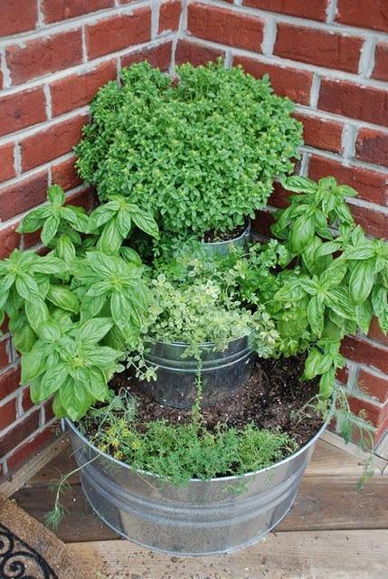 Everyday Finesse Pinterest gardening ideas