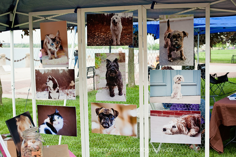 DIY photography display folding screen made with wood and chicken wire by Happy Tails Pet Photography at the 2012 Burlington Humane Soceity ARFmazing Race fundraiser in Spencer Smith Park, Ontario.