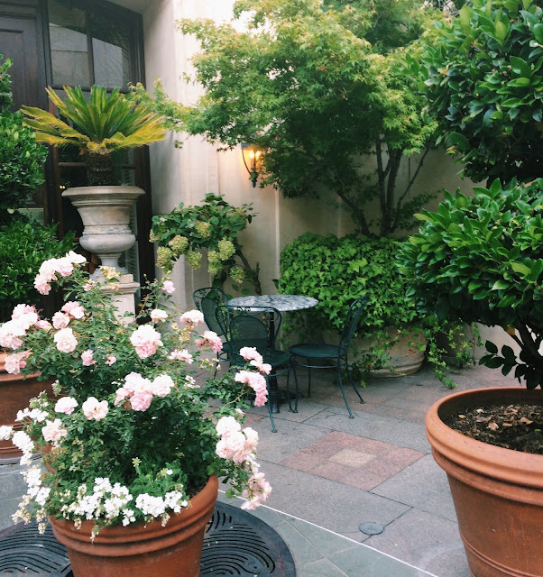 courtyard with plants