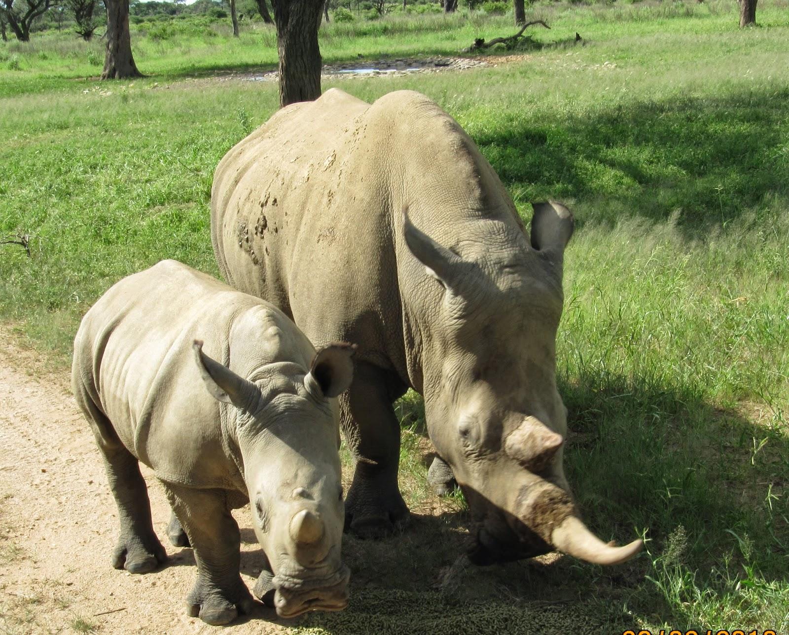 Rhinos Namibia