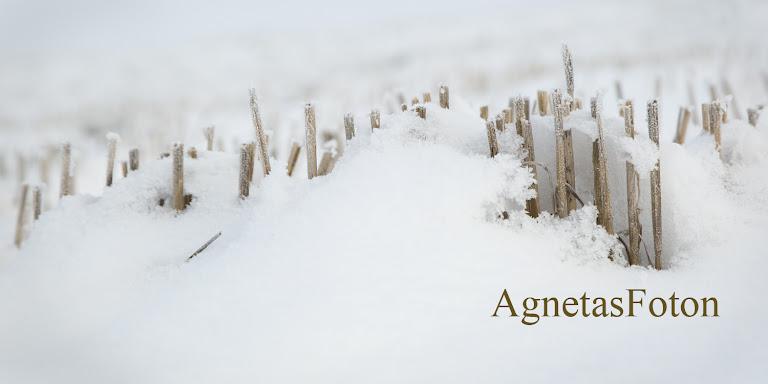 Agnetas Foton