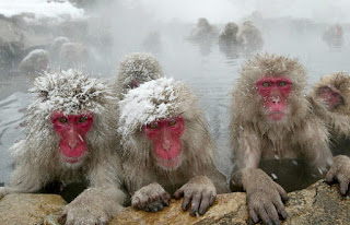scotland scottish tourism japanese macaques