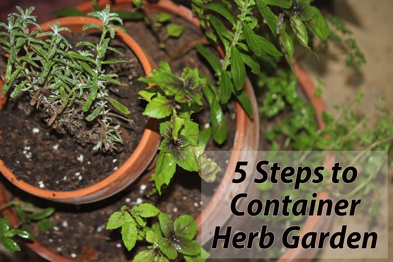 Florida Container Herb Garden