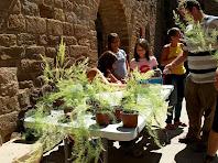Una planta d'esparreguera com a obsequi ecològic