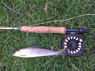 Grayling caught on Church Pool.  River Wye, Builth Wells