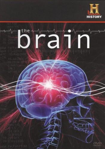 Brain Dvd4