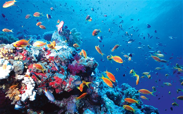 Oceans acidifying at 'unparalleled' rate