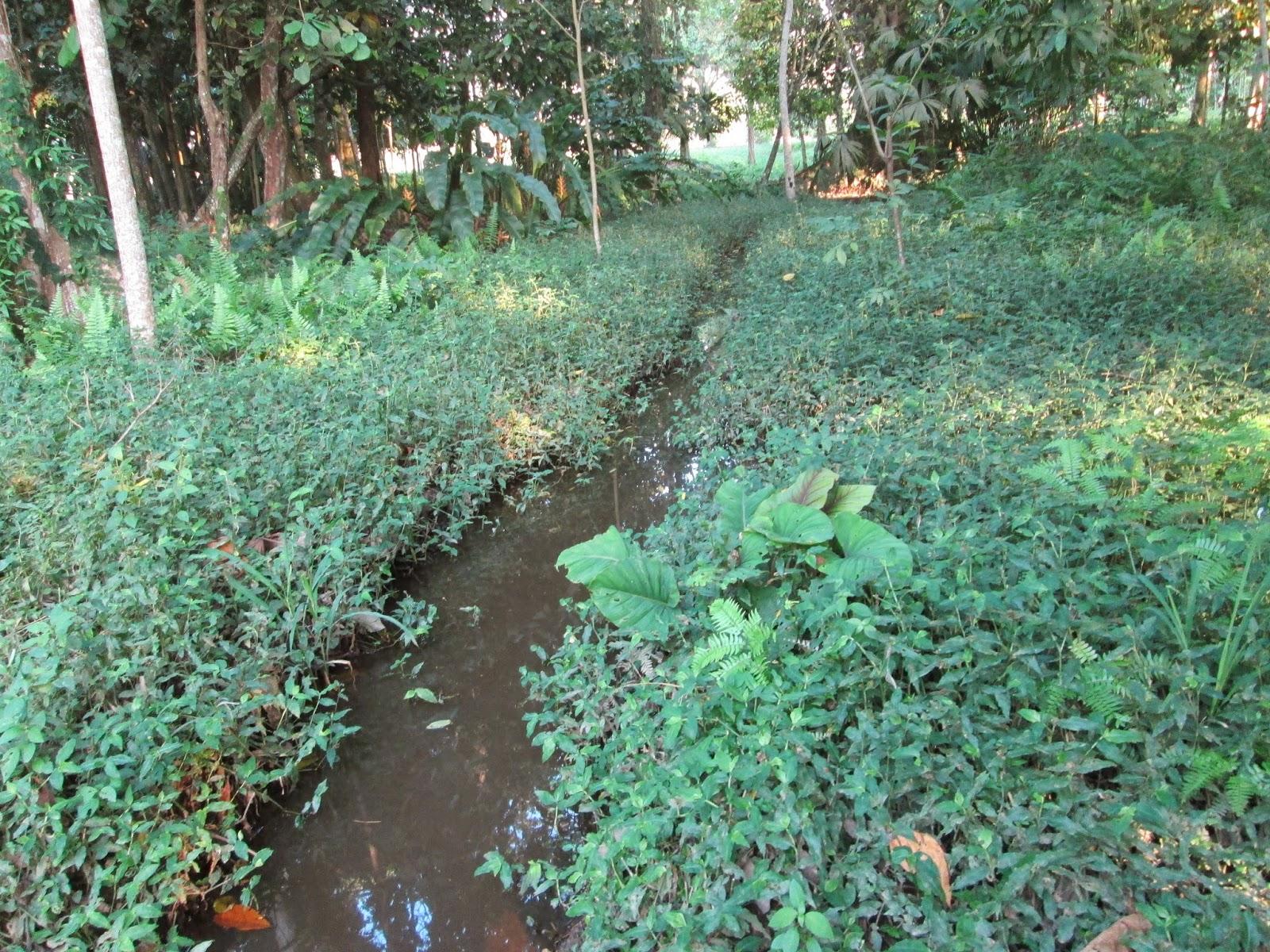 Ventajas de sembrar arboles a las orillas de los rios  Reserva