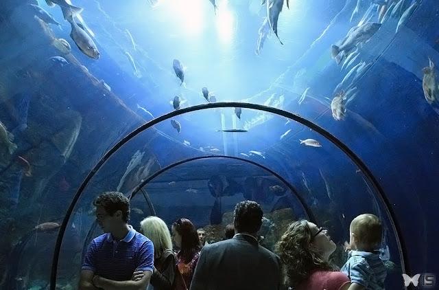 كيبك أكواريوم Aquarium Québec