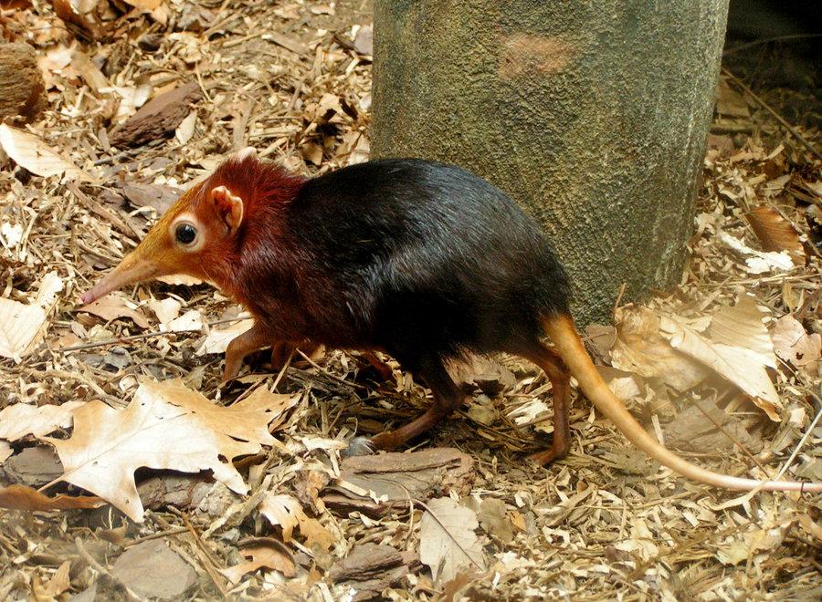 Someone once kept 3 shrews in Shrew Predators