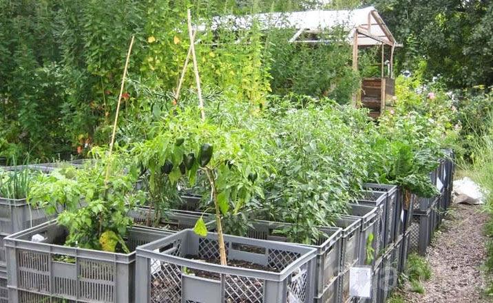 Huerto urbano el huerto en invierno for Preparar el huerto en invierno