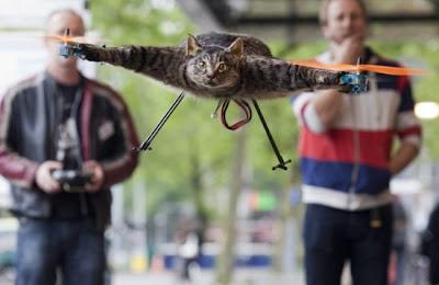 Gato morto transformado em um helicóptero
