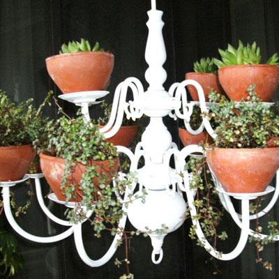 Plant chandelier