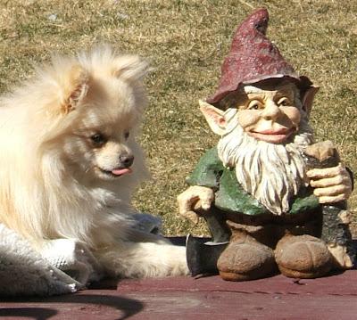 Pomeranian And Kurcaci