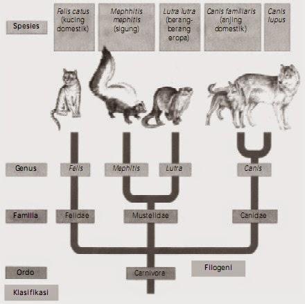 Teori Evolusi dan Klasifikasi Mahluk Hidup