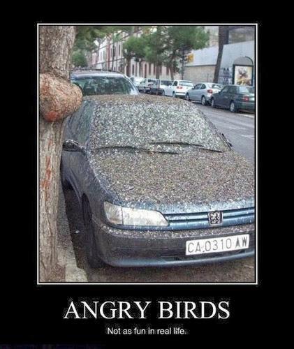 Angry Bird - Magrush