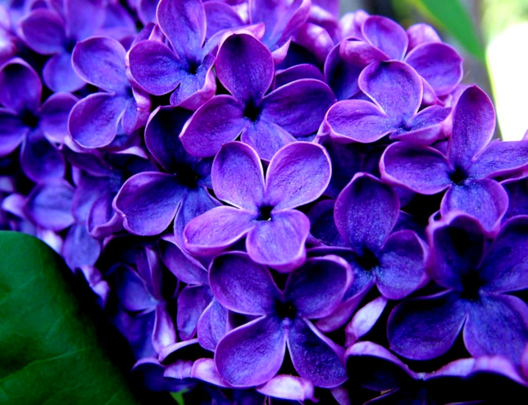 Pictures Of Purple Flowers With Names Amazing Wallpapers