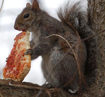 a las ardillas les gusta la pizza