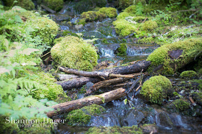 Shannon Hager Photography, Forest Stream