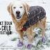 Mην αφήνετε το σκύλο  το χειμώνα χωρίς νερό!...