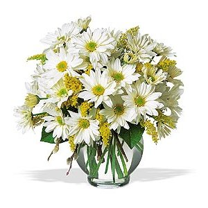 Send Flowers with a Vase of Daisies