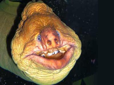 Ikan Pelik