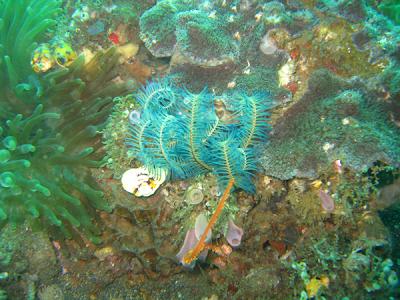 http://indoneculture.blogspot.com/2013/07/underwater-heaven-of-bunaken-indonesia.html
