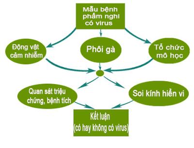 Ảnh nguyên lý của phương pháp nuôi cấy và phân lập virus