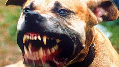 Οι 10 πιο επικίνδυνες ράτσες σκύλων