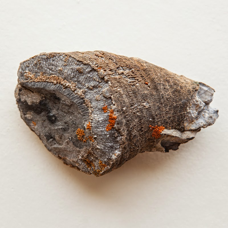 fossils, lemhi range, idaho