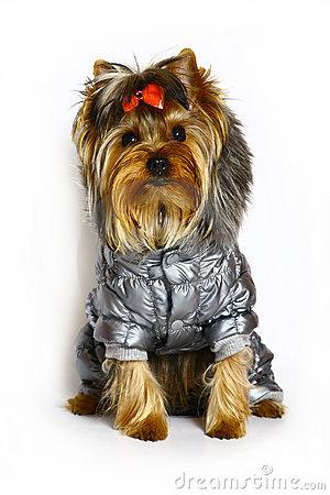 Je rozdiel obliekať psa a obliekať psa