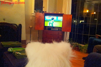 Purse cat watching soccer