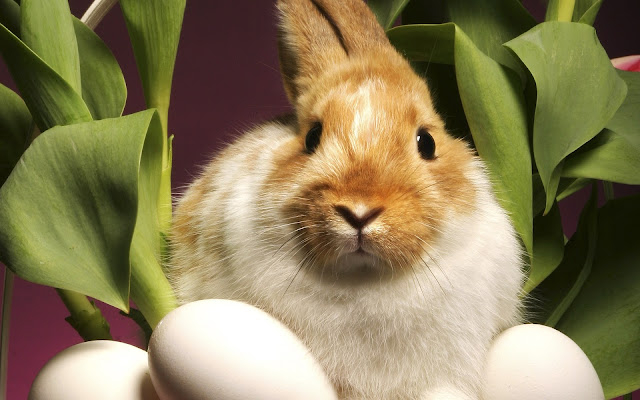 Best Jungle Life rabbit, flowers, eggs