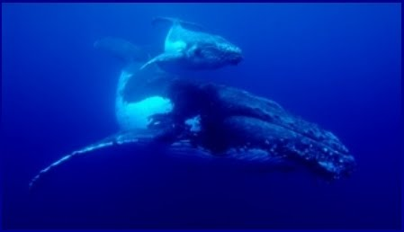 JAPANESE TSUNAMI, WHEN WHALES FIGHT BACK?